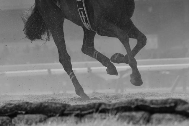 きおりステーブル 競走馬の育成、飼育等募集
