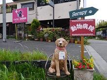 東京稲城市若葉台の働きやすい動物病院