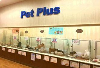 PetPlus成田店の幸せ配達人♪ペットショップスタッフ募集