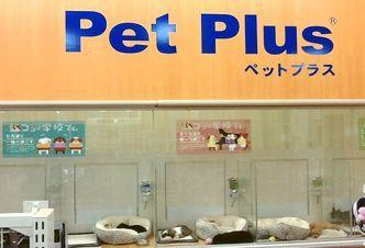 PetPlus明石店の幸せ配達人♪ペットショップスタッフ募集