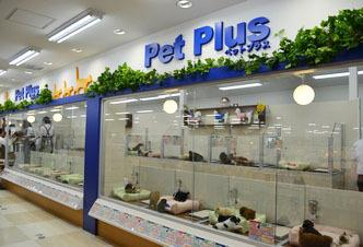 PetPlus アミーゴ藤沢店のペットショップスタッフ募集