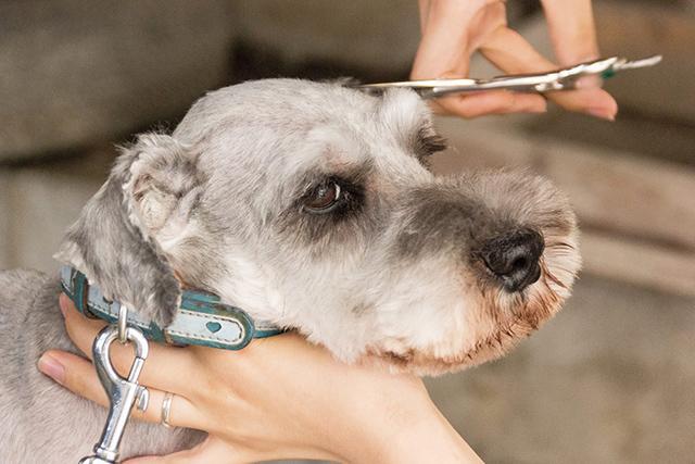 みさき動物病院 動物病院の受付、診療助手募集