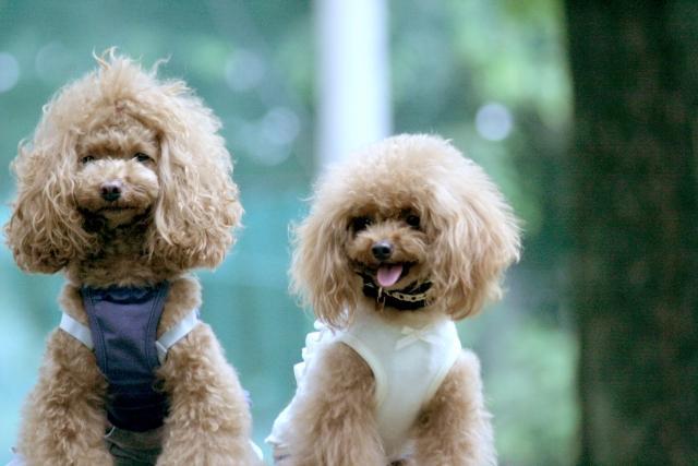 ドッグサロンポチ・たま 犬の美容師(トリマー)募集