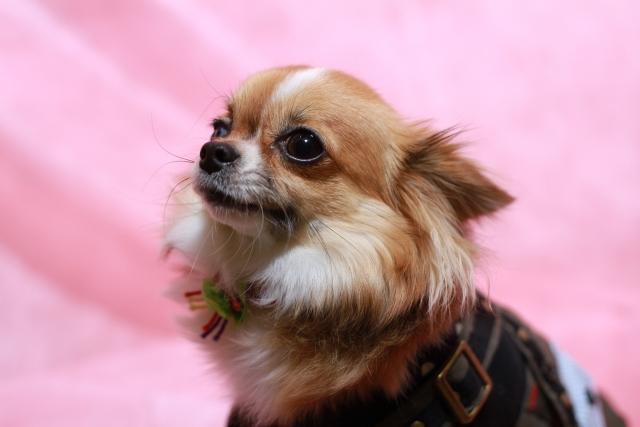 犬の家 トリマー(三重桑名店)募集