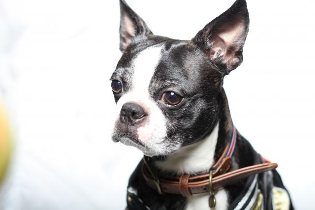 DogsalonOLLIEMAGIC(ふじ屋) トリマースタッフ募集
