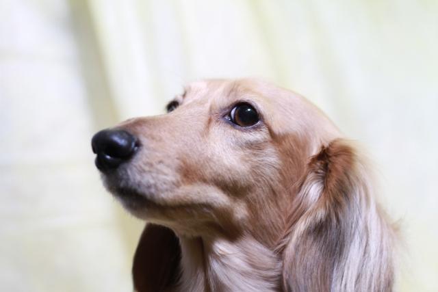 いづみ印刷 動物の飼育:愛護活動募集