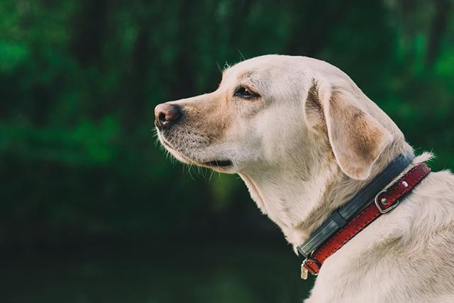 (株)ファースト 犬の飼育スタッフ≪急募≫募集