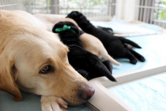 プレジール 犬の飼育・接客募集