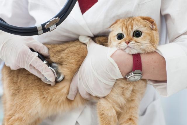 VETS(土師獣医科病院) 動物看護助手募集