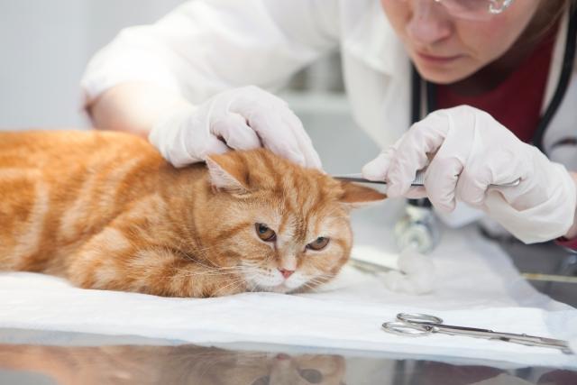 テリア 動物看護師募集