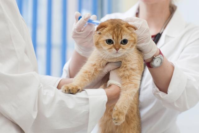 さくま動物病院 動物看護助手募集
