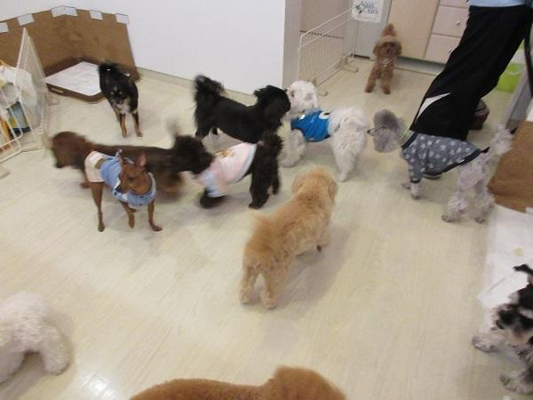 犬の保育園トレーナー及び送迎スタッフ急募