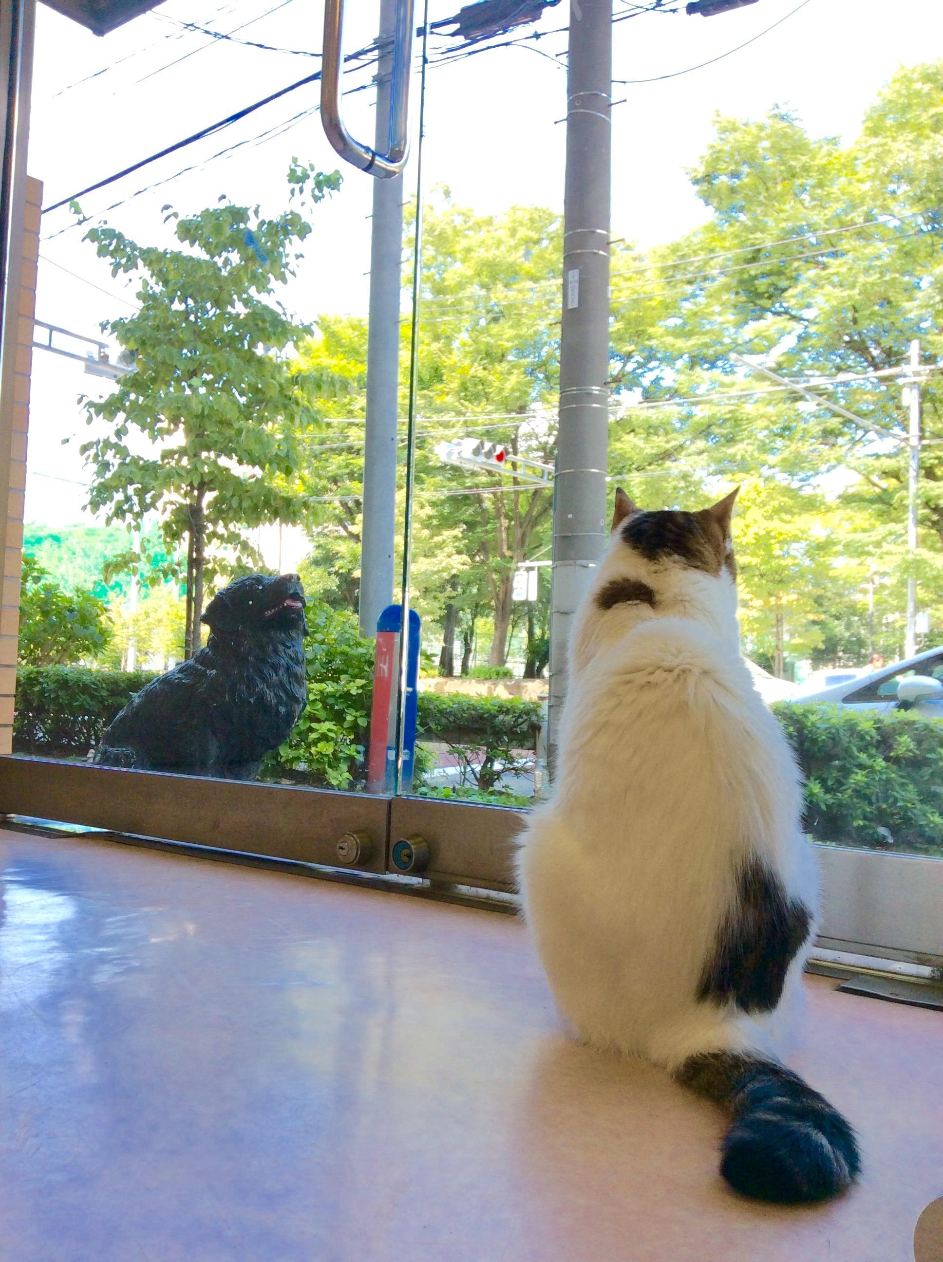 急募!!松尾犬猫病院 動物看護師募集(北区)資格経験不問