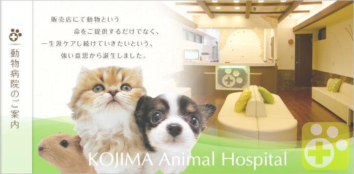 動物看護師募集。コジマグループで働きませんか?