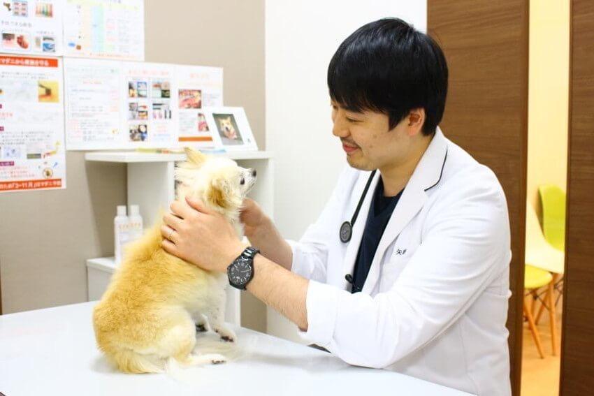 専門分野を持ちたい獣医師募集!