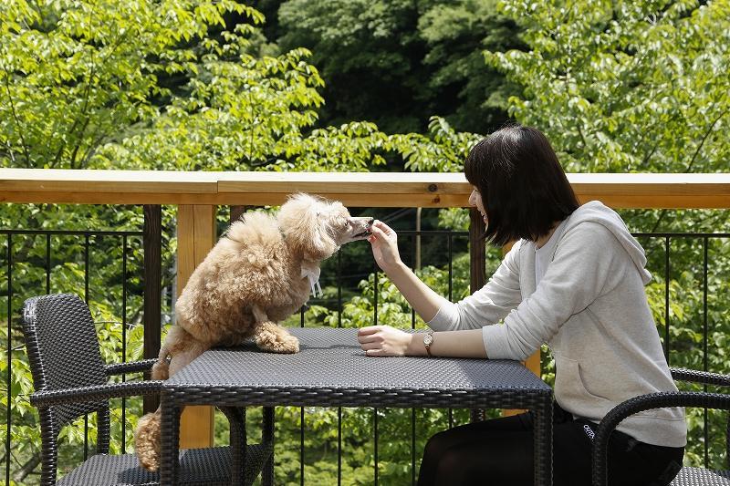 緑豊かな六甲アイランドで愛犬とお客様との寛ぎのひとときをお届けします。