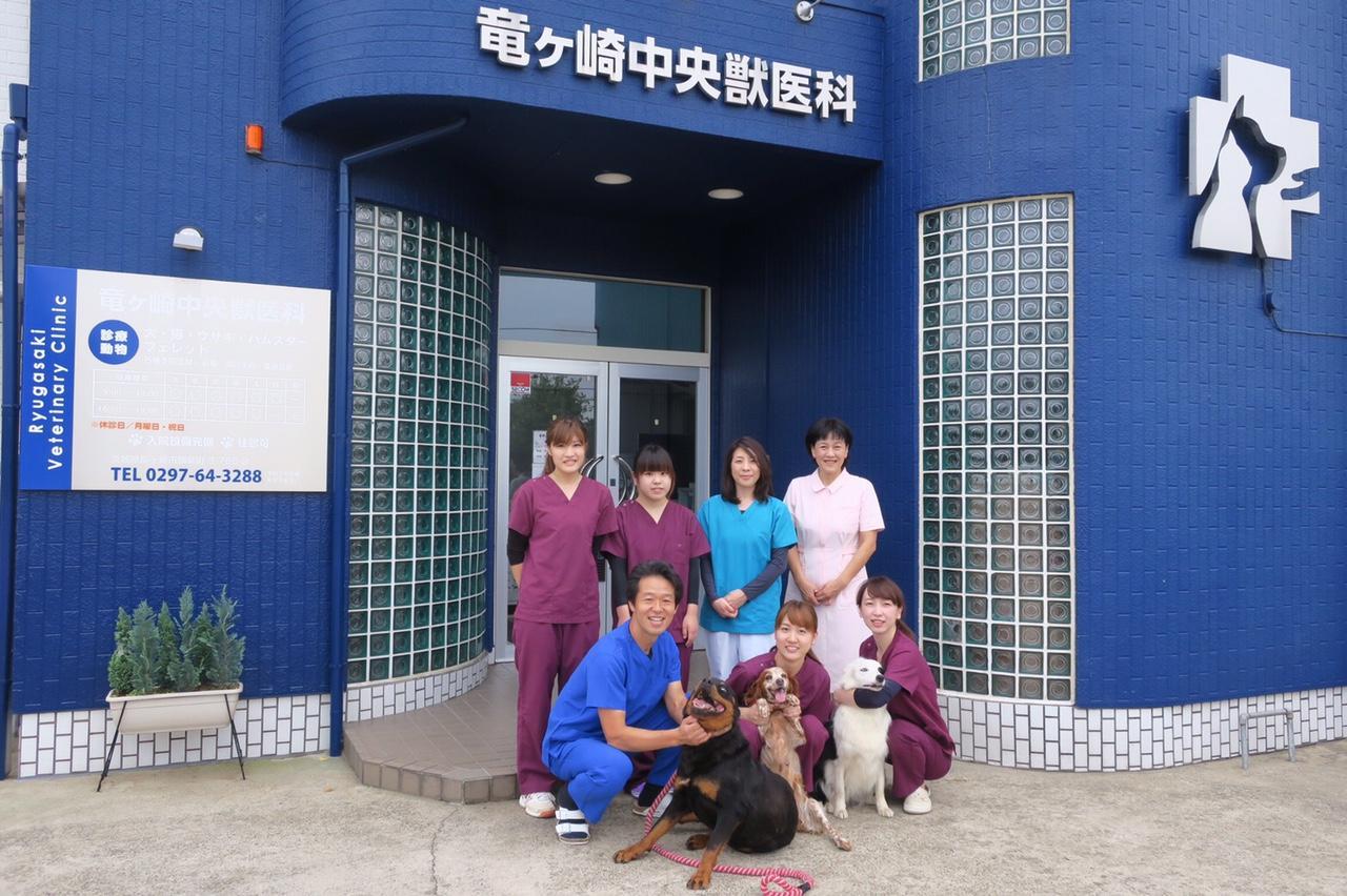 動物病院 診療補助
