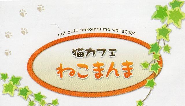 猫カフェ、猫専門美容室、猫専用ホテル。猫専門店です。