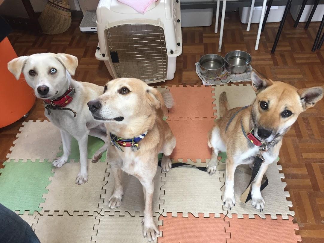 シェルターの保護犬達の様子
