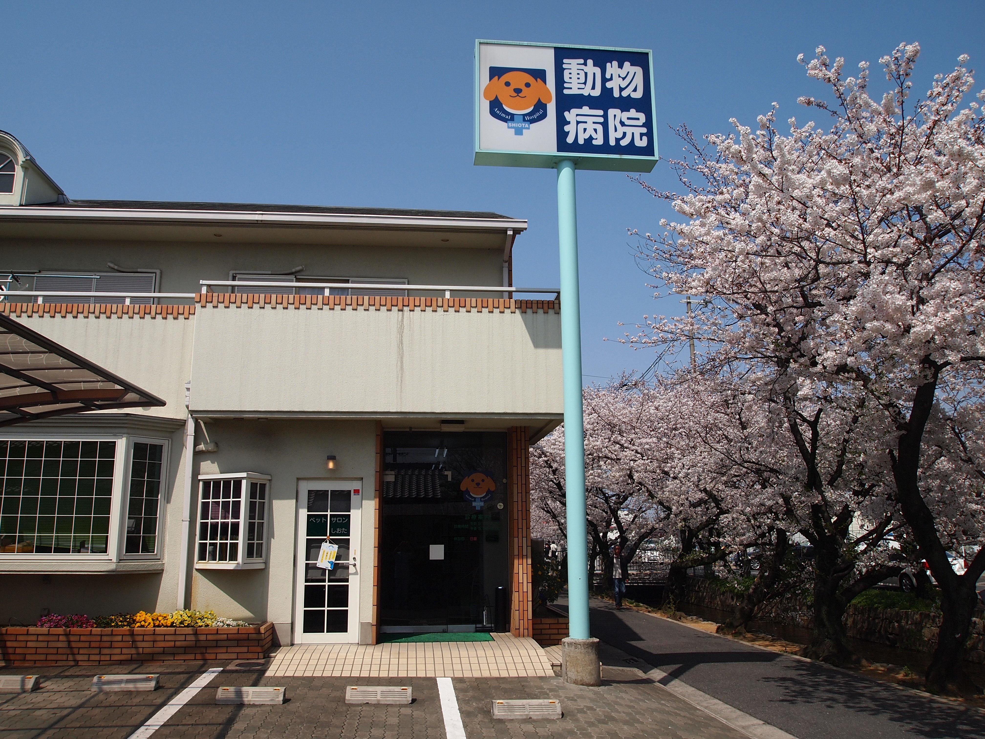 八尾市にて動物病院スタッフ 募集中