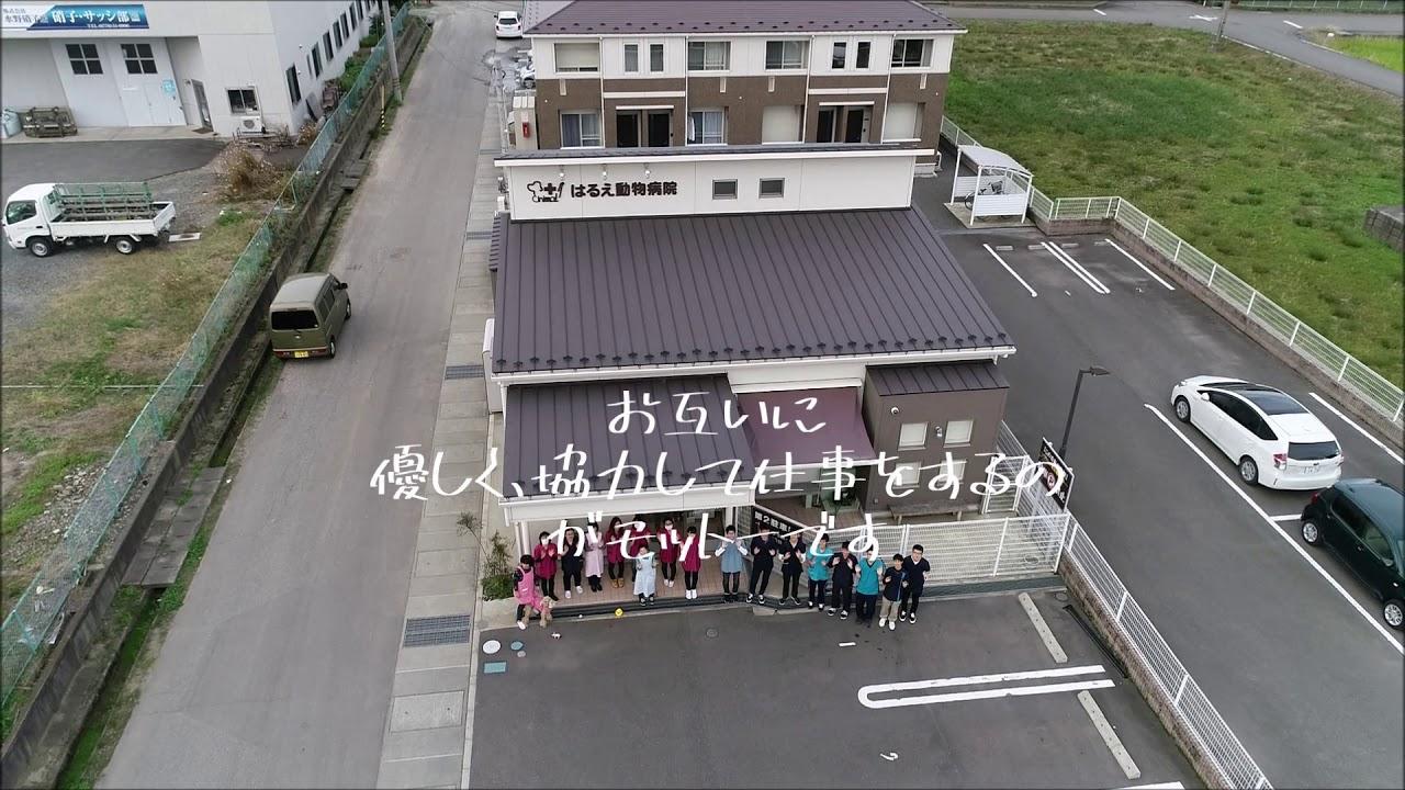 福井県 獣医師募集