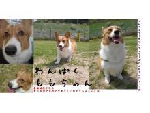 トリマー・子犬販売スタッフ募集中♪